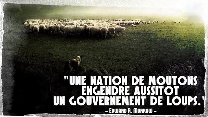 Une-nation-de-moutons...